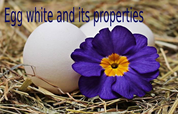 Egg white and its properties
