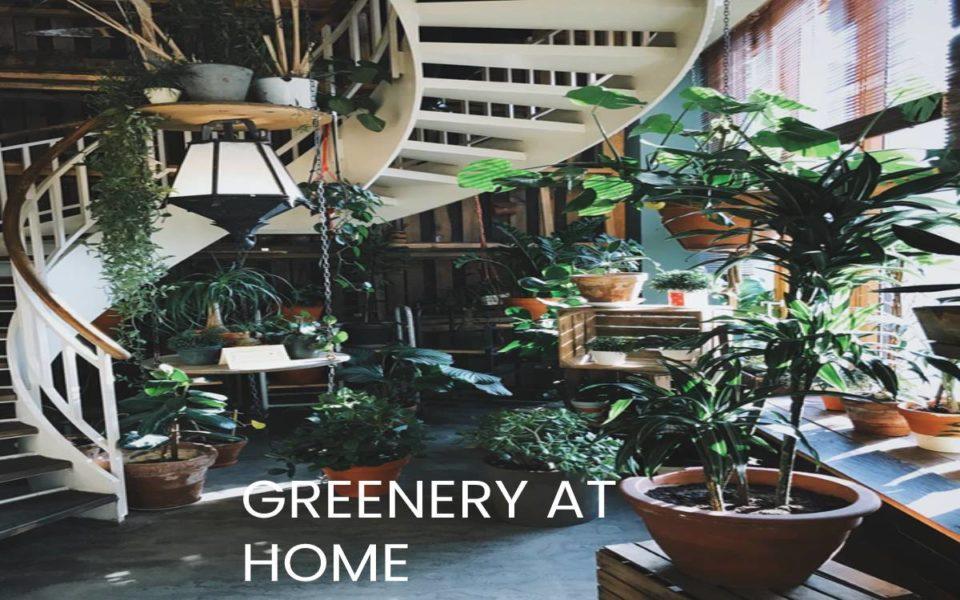 Greenery at home