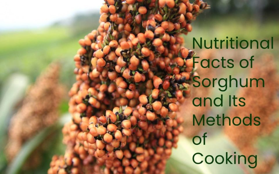 Nutritional Facts of Sorghum and Its Methods of Cooking