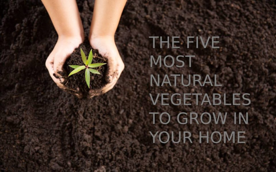 THE FIVE MOST NATURAL VEGETABLES TO GROW IN YOUR HOME