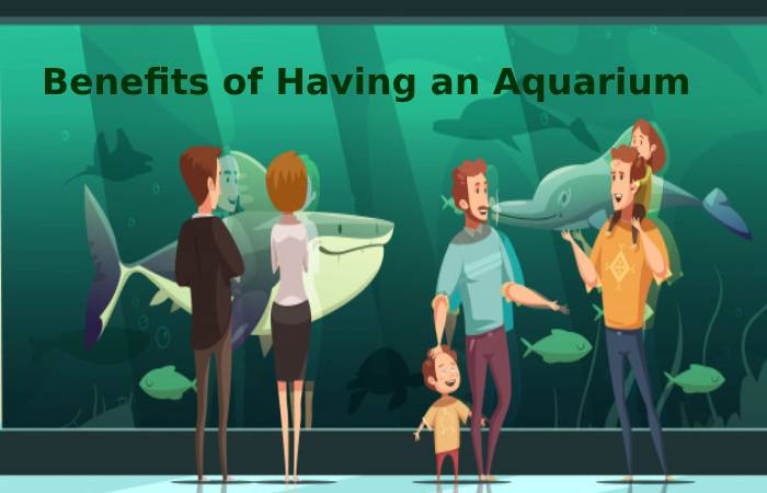 Benefits of having an aquarium