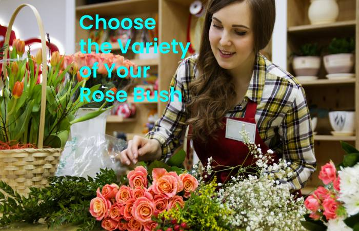 Choose the variety of your rose bush
