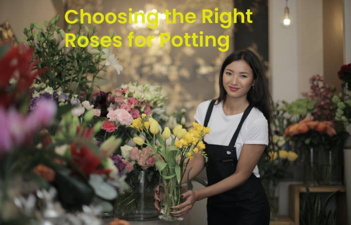 Choosing the right roses for potting