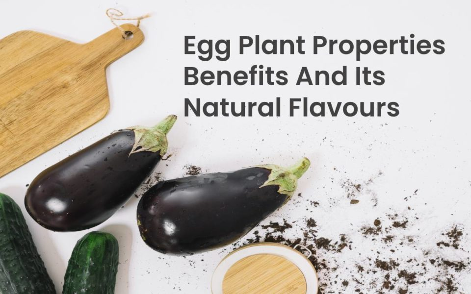 Egg Plant properties benefits And Its Natural Flavours
