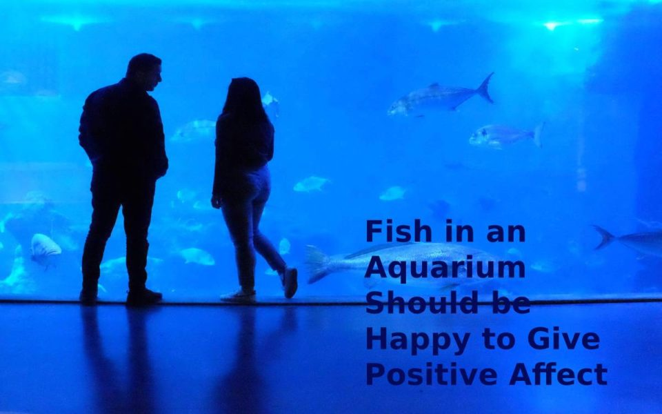 Fish in an Aquarium should be Happy to Give Positive Affect