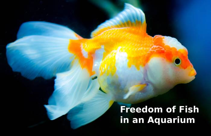 The Right Environment for Fish in an Aquarium