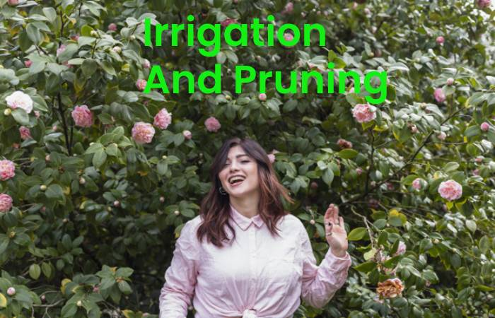 Irrigation and Pruning