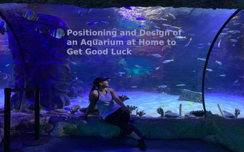 Positioning and Design of an Aquarium at Home to Get Good Luck