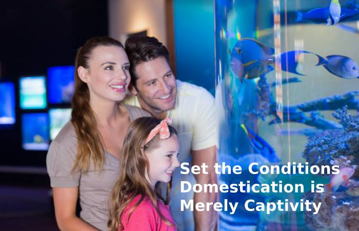 Set the Conditions Domestication is Merely Captivity