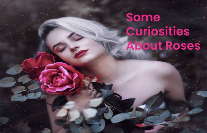 Some Curiosities About Roses