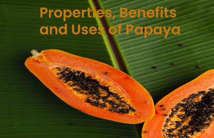 Properties, benefits and uses of papaya