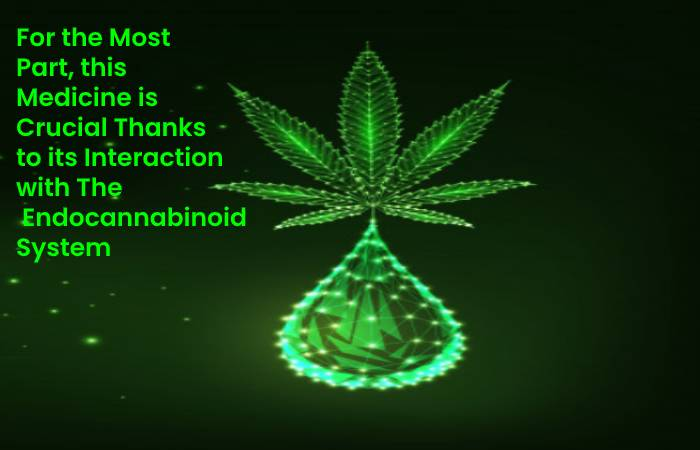 Interaction with The  Endocannabinoid System