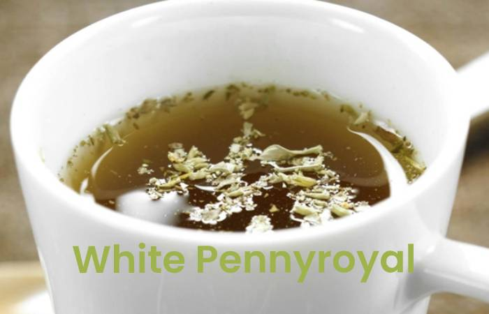 white pennyroyal