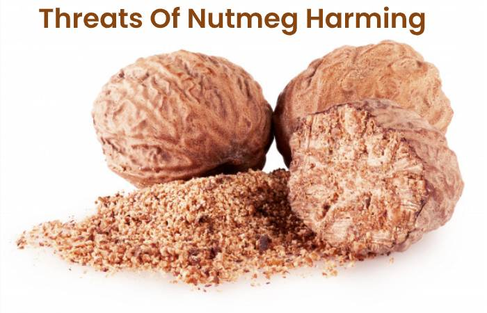 Threats Of Nutmeg Harming