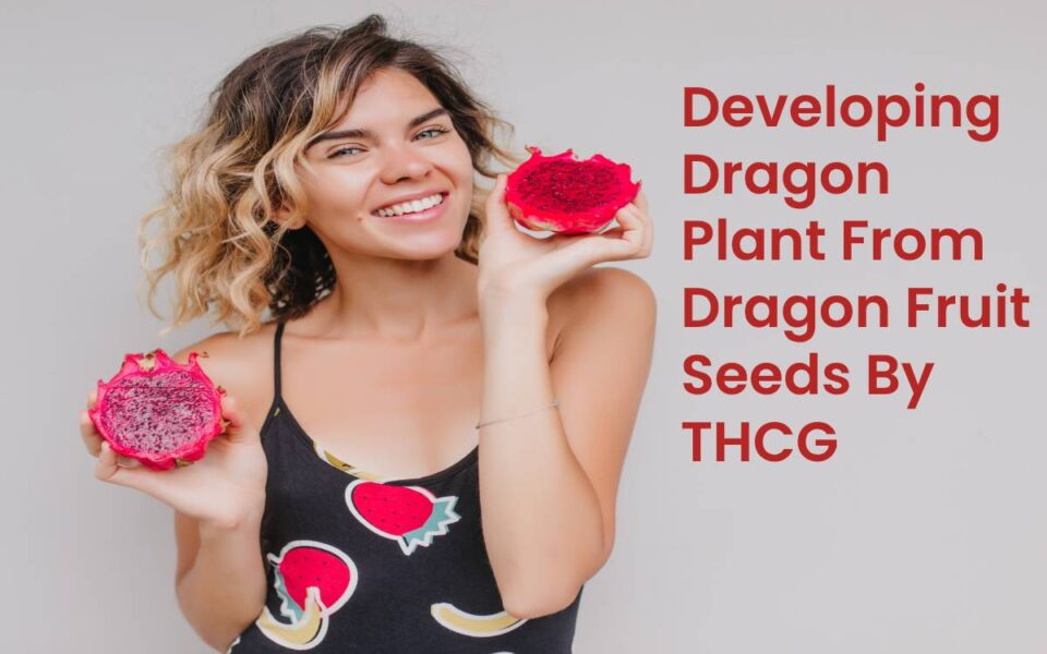 Developing Dragon Fruit From Dragon Fruit Seeds By THCG