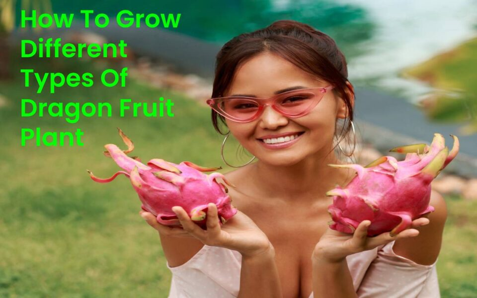 How To Grow Different Types Of Dragon Fruit Plant