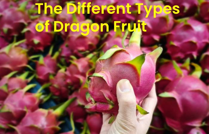 The Different Types of Dragon Fruit Plant