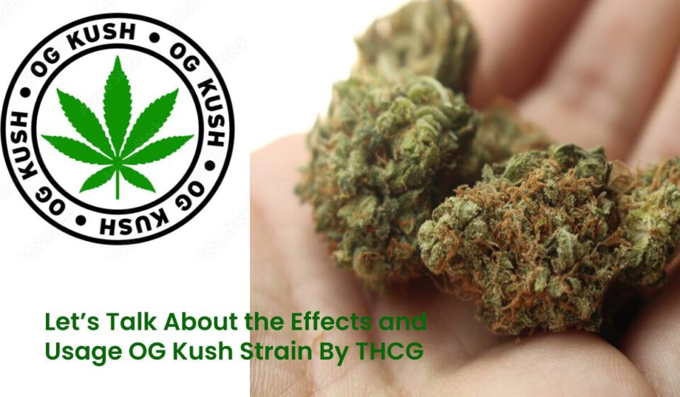 Effects and Usage OG Kush Strain By THCG